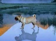 حکایت جالب راه رفتن سگ روی آب