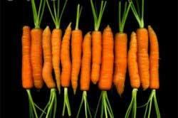 هویج ها را شیک و مجلسی کنیم