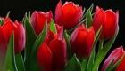 محلول و ویتامین برای محافظت  بیشتر گل ها