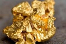 میکروبی که طلا ساز است