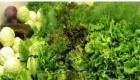 مصرف و پخت صحیح سبزی ها