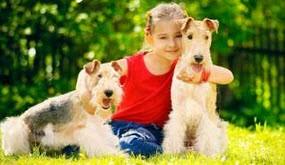 اینگونه از حیوانات خانگی محافظت کنید