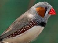 3 گونه پرنده ی مناسب کودکان