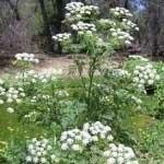مرگ اور ترین گیاهان جهان
