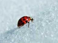چرا در زمستان حشرات یخ نمی زنند