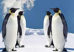 چرا پای پنگوئن ها در یخبندان یخ نمی زند