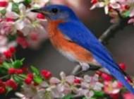 چرا پرندگان آواز می خوانند