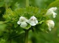 اگر حساسیت فصلی دارید این گیاهان به دردتان می خورد