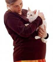 گربه برای زنان باردار خطرساز است