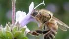 راز زندگی زنبور ها