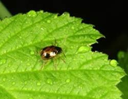 دانستنی های جالب در مورد تنوع گونه حشرات