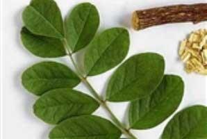 گیاه  والک متخصص درمان  مشكلات قلبی و عروقی
