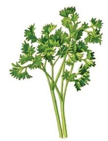 گیاهی با عملکرد جارو برقی برای کلیه ها