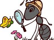 قصه های جالب و کودکانه ی هوس های مورچه ای