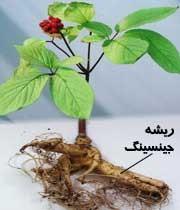 چندین گیاه و هزاران خاصیت مفید