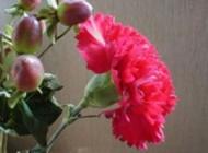 روغن گل میخک خستگی شما را از بین می برد