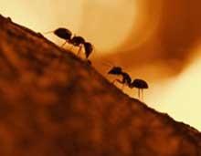 دانستنی های جالب و حیرت انگیز در مورد خلقت مورچه