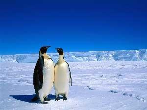 چرا جانداران در قطب خونشان یخ نمی زند؟