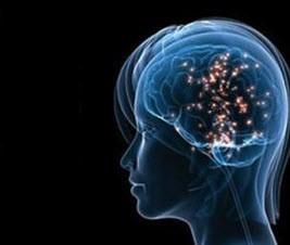 واقعیت های علمی در مورد مغز انسان