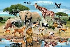 دانستنی های عجیب در مورد حیوانات