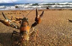 واقعیت هایی در مورد خرچنگ