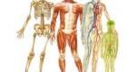 16 شگفتی در مورد بدن انسان
