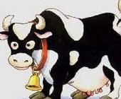 دانستنی هایی در مورد گوشت گاو