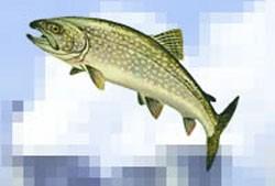 ریشه یابی ضرب المثل ماهی از سرگنده گردد نی زدم