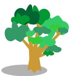 ماه تولد شما چه درختی است؟