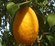 خواص جالب در نارنج