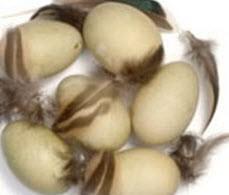 کدام نوع تخم مرغ ارزش تغذیه ای بیشتری دارد