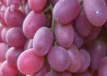 جوانی را با خوردن انگور قرمز تجربه کنید