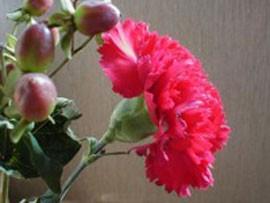 خاصیت ضدمیکروبی روغن گل میخک