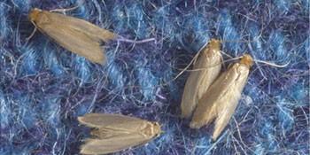 راهی برای جلوگیری از بید خوردگی قالی