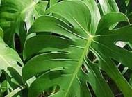 شرح کاملی از رشته تكنولوژی تولیدات گیاهی