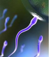 چه عواملی بر سلامت اسپرم تاثیر می گذارد؟