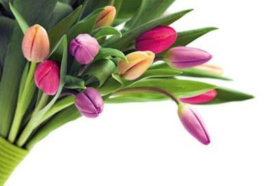 گل و گیاه و فنگ شویی در خانه