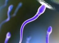 چه تعداد اسپرم برای باردارشدن زن لازم است؟
