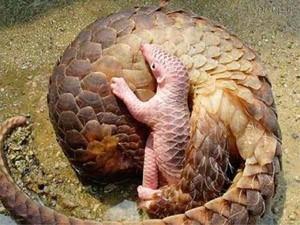 حیوان عجیبی که هم شبیه مار است هم ماهی (عکس)