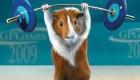 8 روش فرار دادن موش از خوابگاه (طنز)
