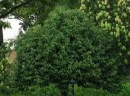 دانستنی های علمی در مورد درختان