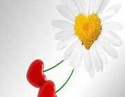تعارف عشق و محبت در سینی صداقت