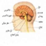 کمک به تقویت مغز با این کارها
