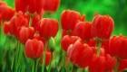 شعر جدید و زیبا ویژه تولد امام رضا