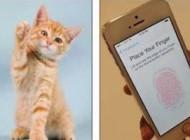 گربه ای که امنیتی آی فن 5 اس را تمسخر کرد