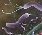 میکروب های چاق کننده