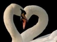 دانستنی های اظهار عشق