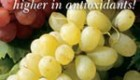 غذای ارگانیک یعنی چی؟