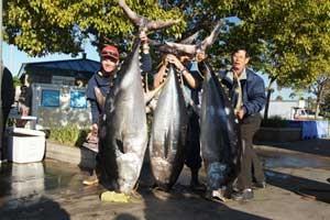 فروش یک ماهی 230 کیلو به قیمت هفتاد هزار دلار (عکس)